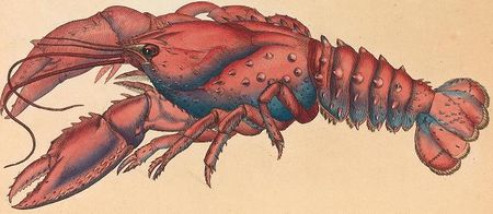 James Sowerby - Serrated Lobster, Cancer serratus 1- Google Art Project.jpg